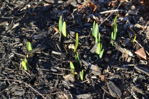 Spring is on the way!